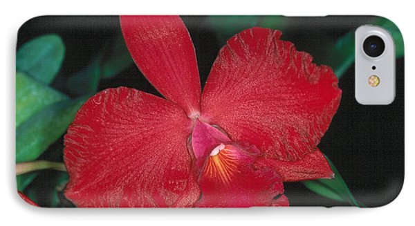 Orchid 12 IPhone Case
