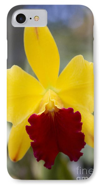 Orchid Beauty - Cattleya - Pot Little Toshie Mini Flares Mericlone Hawaii Phone Case by Sharon Mau