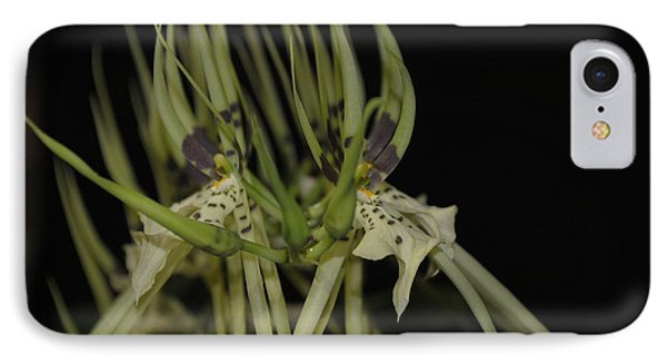 Orchid Chorus Line IPhone Case