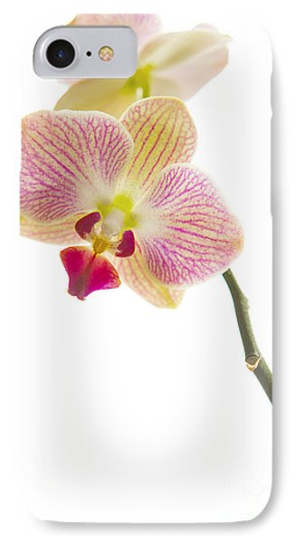 Orchid IPhone Case by Diane Diederich