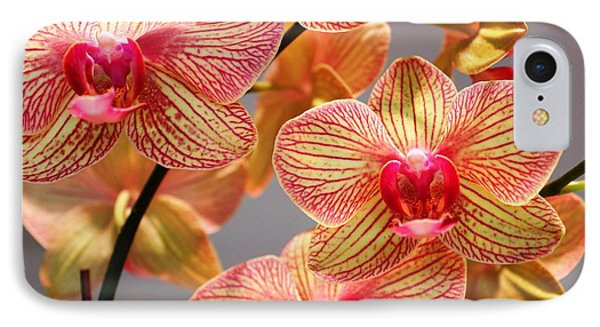 Orchid IPhone Case by Judy Palkimas