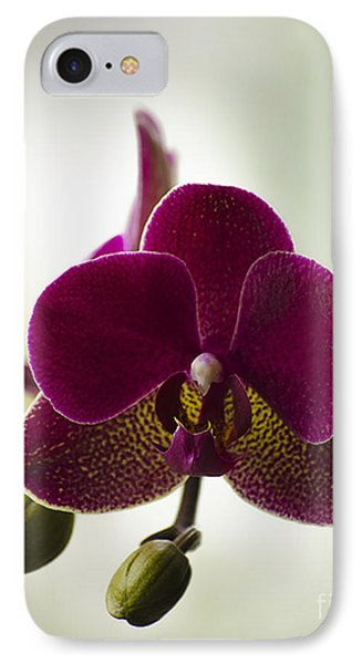 Orchid IPhone Case by Linsey Williams