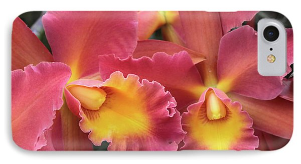 Orchids Ablaze IPhone Case by Harold Rau