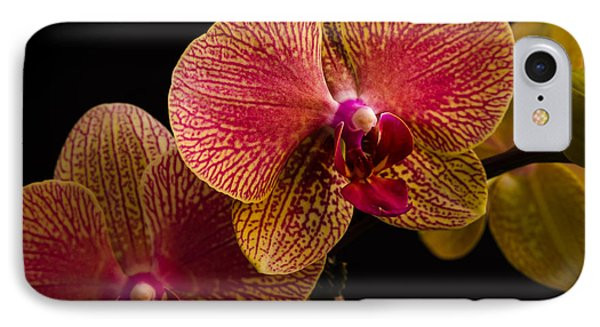 Orchids IPhone Case by Frank Mari