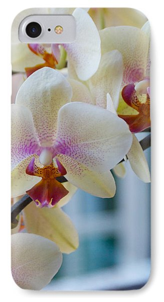 Orchids In The Morning Light IPhone Case by Debbie Karnes