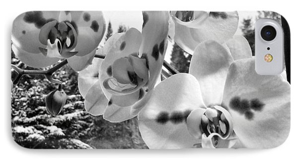 Orchids In Winter IPhone Case