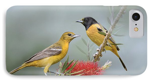 Orioles IPhone Case by Bonnie Barry