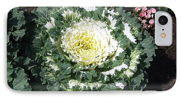 IPhone Case featuring the photograph Ornamental Cabbage by Sheila Byers