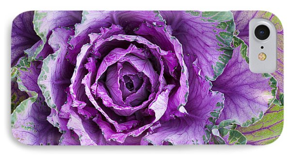 Ornamental Cabbage IPhone 7 Case by Tim Gainey