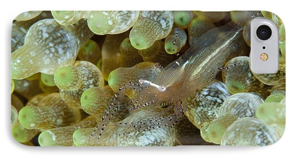Ornate Anemone Shrimp In Anemone Phone Case by Steve Jones