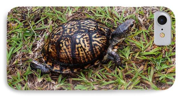 Box Turtle Phone Case by Mechala  Matthews
