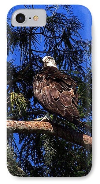 Osprey 005 IPhone Case by Chris Mercer