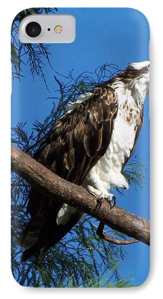 Osprey 102 IPhone Case by Chris Mercer