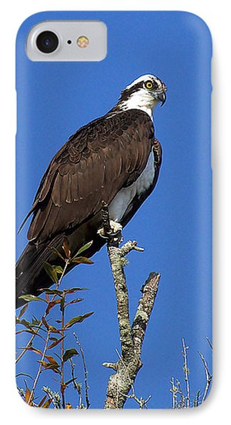 Osprey 109 IPhone Case by Chris Mercer