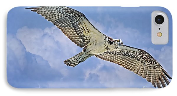 Osprey 91711 IPhone Case by Deborah Benoit