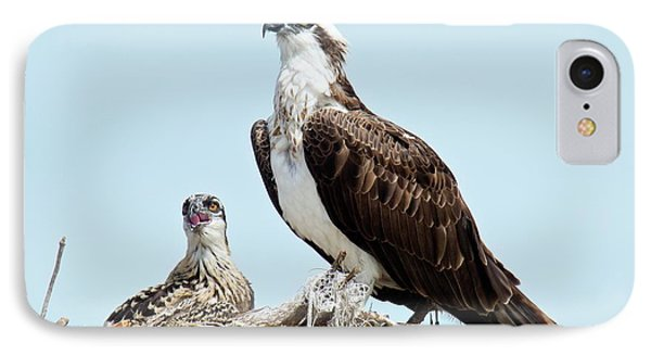 Osprey And Chick IPhone Case by Bob Gibbons
