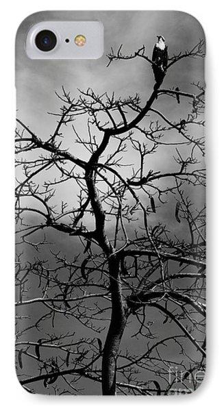 Osprey Atop A Poinciana IPhone Case by Lynda Dawson-Youngclaus