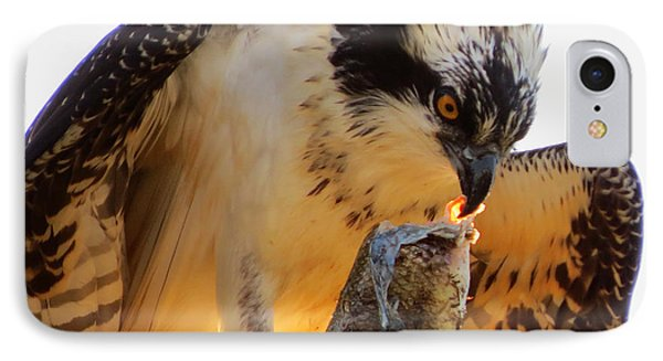IPhone Case featuring the photograph Osprey Breakfast by Dianne Cowen