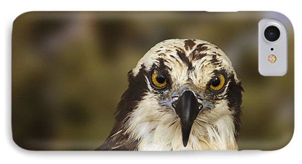 Osprey  IPhone Case by Brian Cross