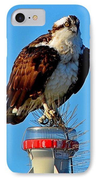 IPhone Case featuring the photograph Osprey Close-up On Water Navigation Aid by Jeff at JSJ Photography