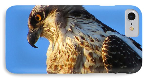Osprey - Eager Youth IPhone Case by Dianne Cowen