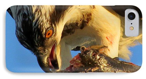 Osprey In August IPhone Case by Dianne Cowen