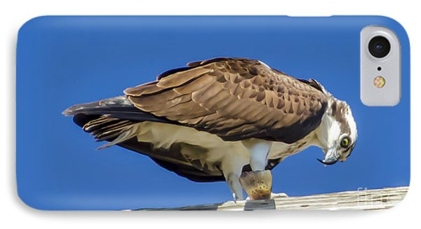 Osprey Eating Lunch IPhone Case by Dale Powell