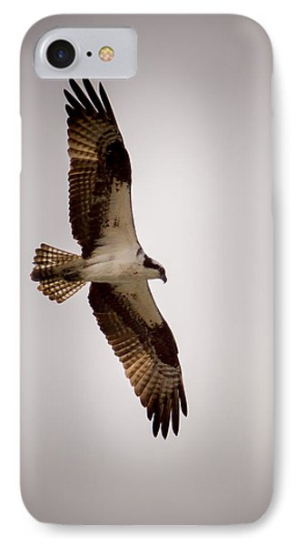 Osprey IPhone Case by Ernie Echols