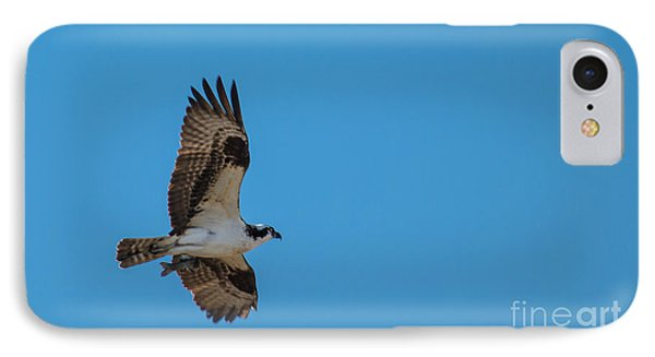 Osprey Flying Home With Dinner Phone Case by Robert Bales