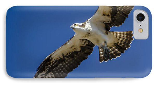 Osprey In Flight IPhone Case by Dale Powell
