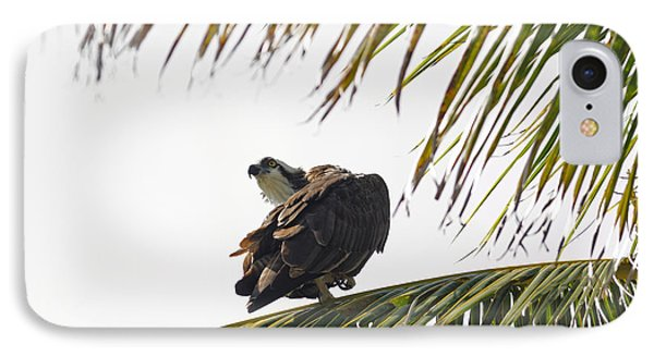Osprey In Sanibel IPhone Case by Natural Focal Point Photography