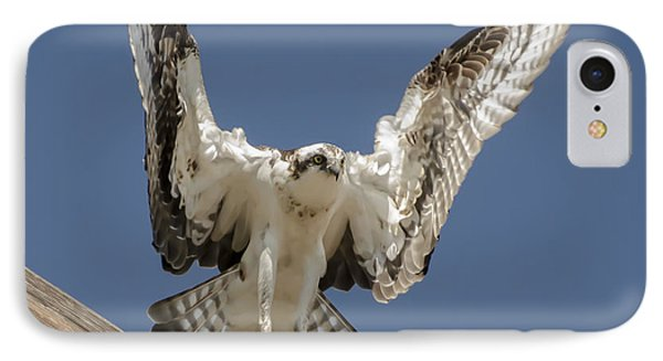 Osprey Landing IPhone Case by Dale Powell