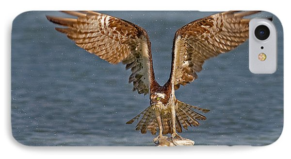 Osprey Morning Catch IPhone Case by Susan Candelario
