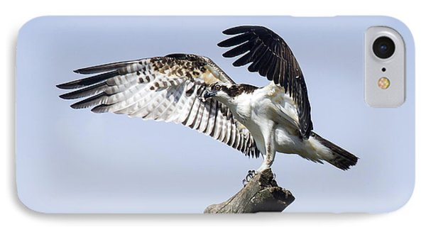 IPhone Case featuring the photograph Osprey Pride 2 by David Lester