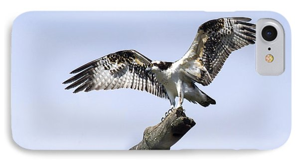 IPhone Case featuring the photograph Osprey Pride  by David Lester