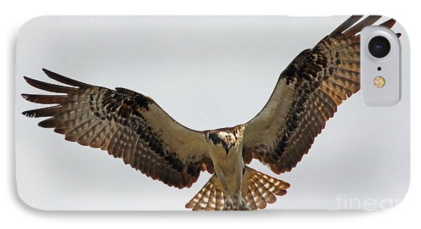 Osprey Spread IPhone Case