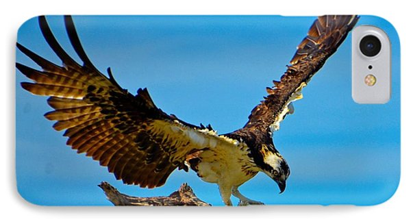 IPhone Case featuring the photograph Osprey Spreading It's Wings by Pamela Blizzard