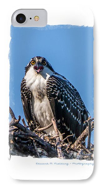 Osprey Surprise Party Card Phone Case by Edward Fielding