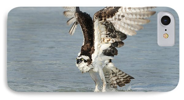 Osprey Taking Off IPhone Case