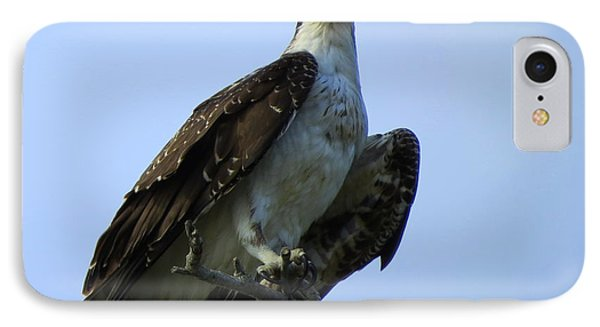 IPhone Case featuring the photograph Osprey View by Phyllis Beiser