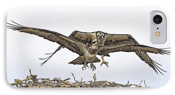 Osprey Wings And Talons IPhone Case by Constantine Gregory