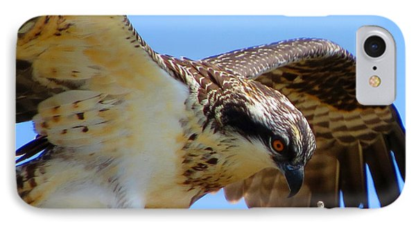 IPhone Case featuring the photograph Osprey Youth by Dianne Cowen