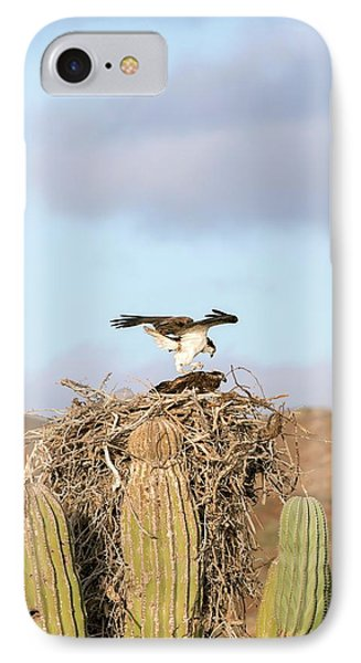 Ospreys Nesting In A Cactus IPhone Case by Christopher Swann