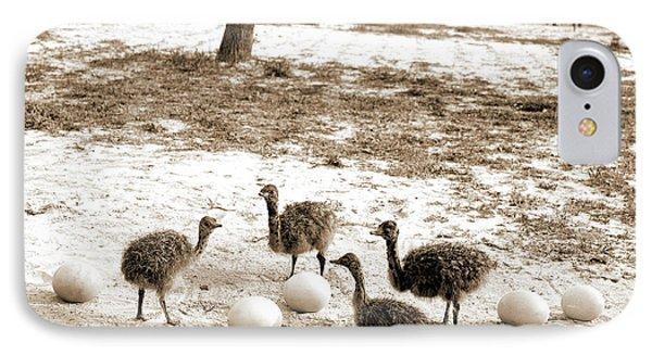 Ostrich Farm, Hot Springs, Ark, Ostriches IPhone Case