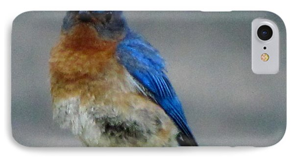 Our Own Mad Bluebird IPhone Case by Betty Pieper
