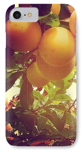 Our Plum Tree Is Loaded This Year...any IPhone Case by Blenda Studio