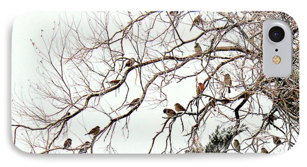 IPhone Case featuring the photograph Out On A Limb First Snow by Barbara Chichester