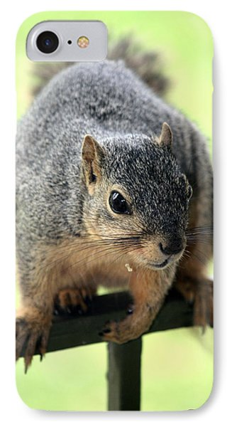 Outdoor Life - Squirrel 1 Phone Case by Angela Rogers