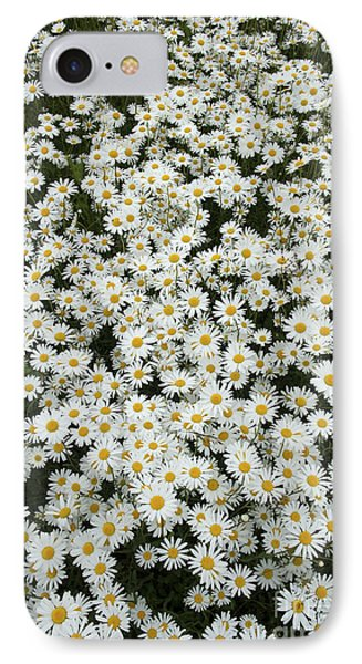 Oxeye Daises IPhone Case