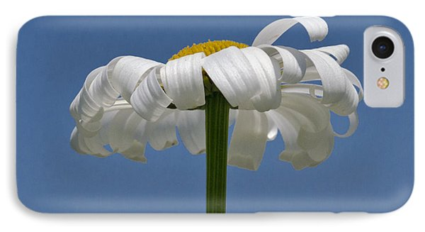 Oxeye Daisy IPhone Case by Dee Cresswell